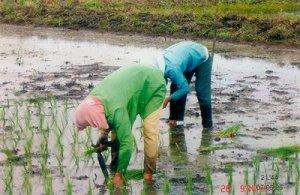 Pertanian Kabupaten Lebak[ilustrasi]