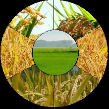 Pertanian Organik Malingping